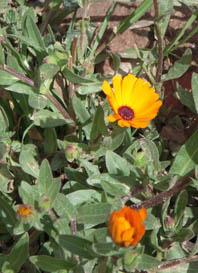 spring-orange