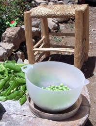 garten-erbsenpulen