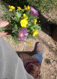 wiesenblumen pflücken2