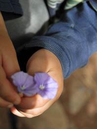 lila blumen hand