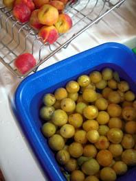 sommer früchte f marm