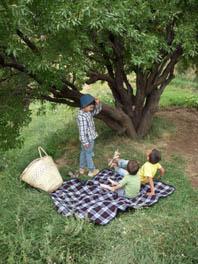wald mandelbaum