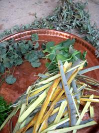 heilpflanzen tablett