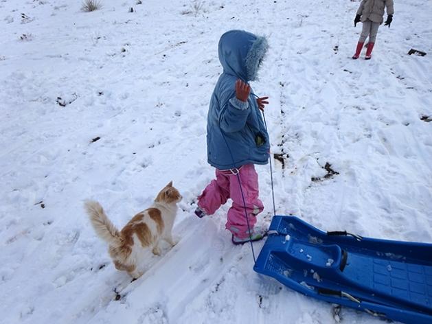 schnee schlitten