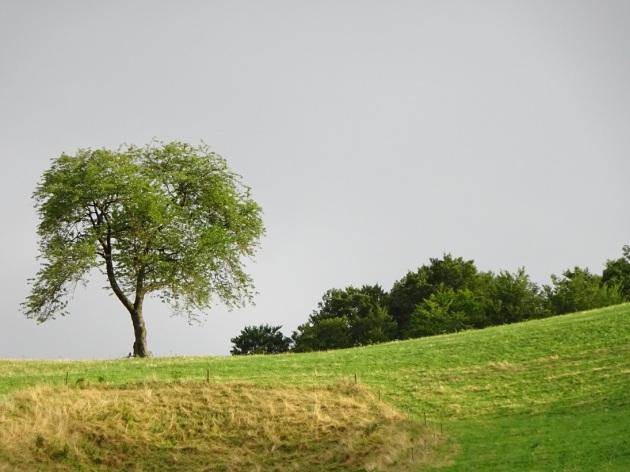 grün6