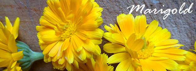 krauter marigold